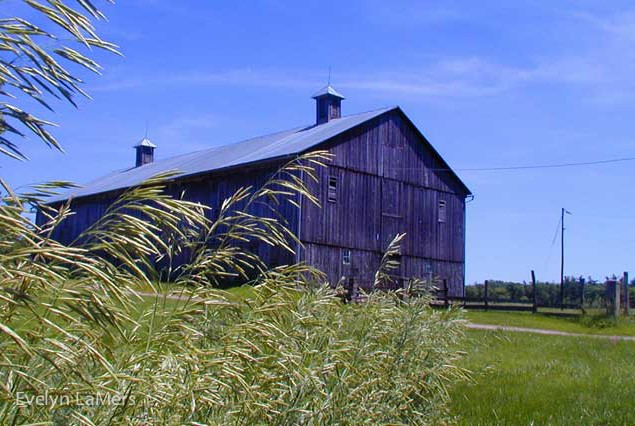 Evelyn_LaMers_Barn-Grasses