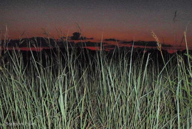 branson-grass-8pt