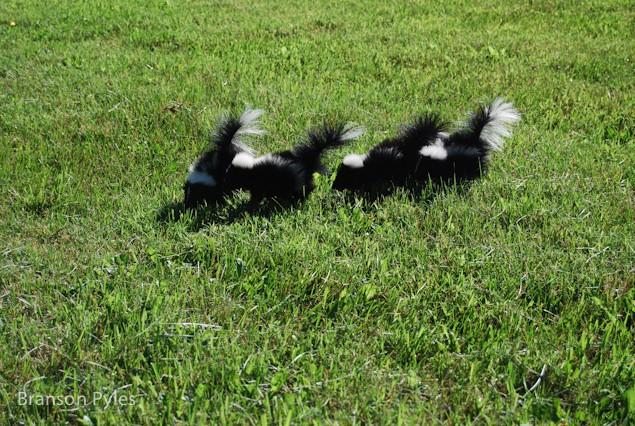branson-skunk-howell-farm-lodging-1-of-1