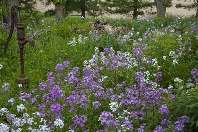 hfl_spring_flowers_eppley-60c