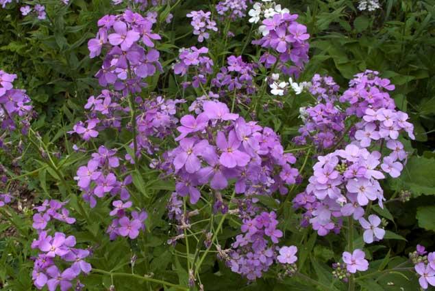 hfl_spring_flowers_eppley-66