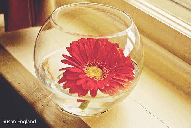 flower-in-water-web2013